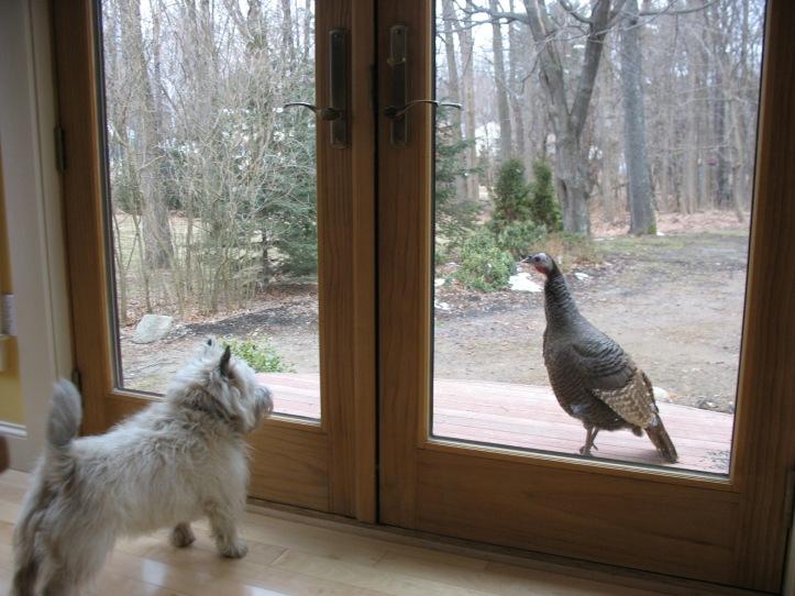 bailey turkey